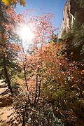 Angels Landing Trail, Zion National Park, Utah