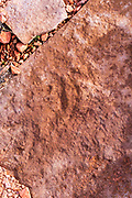 Image of a dinosaur track embedded in sandstone from False Panorama Point,  remote location in the Maze District of Canyonlands National Park, Wayne County, Utah, USA.