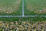 The leaves dropped from overhead ash trees have been blown off football pitch lines by council workers in Ruskin Park, London borough of Lambeth. Days before the weekend starts and the field is used by youth league teams, the painted lines are more visible than before when they were covered, inhibiting clear decisions during a game. It is a scene of regular order, of a regimented and tidy landscape that suggests what pointless job someone has during times of austerity - when Lambeth council is closing libraries, toilets and childrens' play facilities.