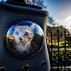 Cat in a backpack on Princes Street, Edinburgh
