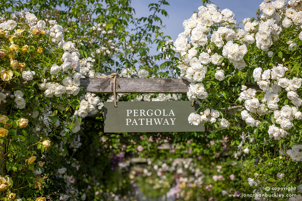 Entrance to the Pergola Pathway with Rosa 'Iceberg' on the right