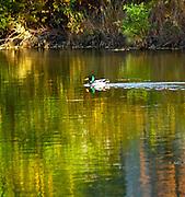 Gring's Mill, Tulpehocken River, Berk's County, Pennsylvania