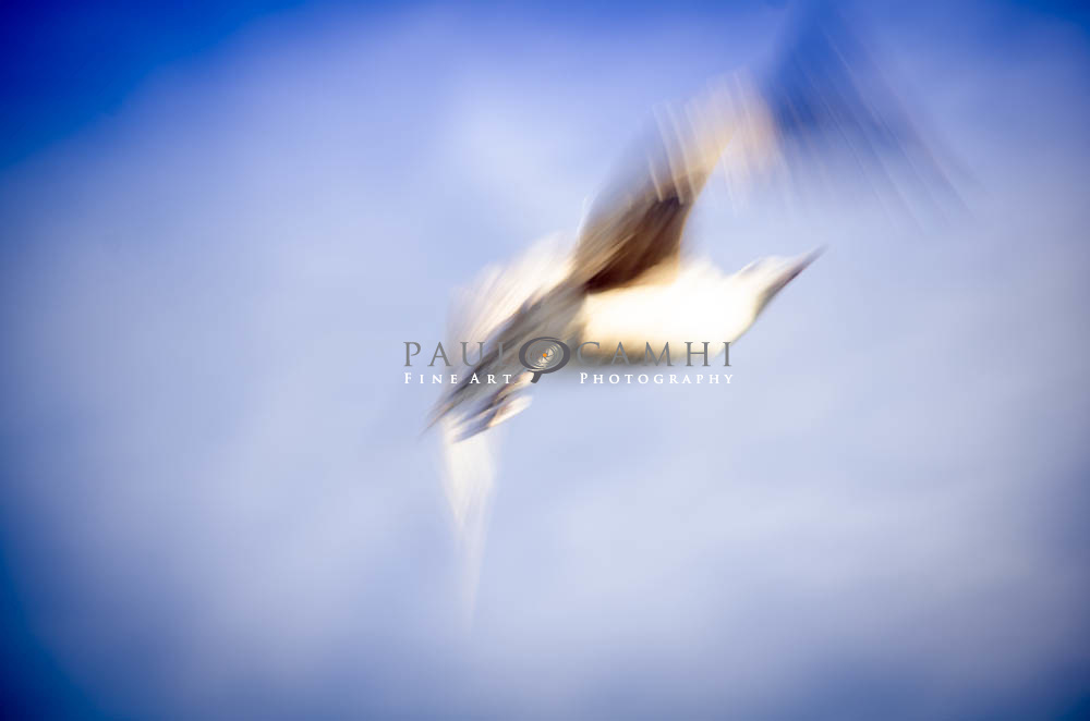 Limited edition Fine Art Photography, pigment ink giclée print, dated and signed photography for decoration Limited edition Fine Art Photography, pigment ink giclée print, dated and signed photography for decoration