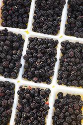 Picked blackberries