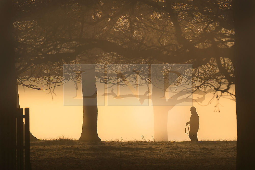 © Licensed to London News Pictures. 14/02/2019. London, UK. A visitor walks through the trees at first light in Bushy Park. Clear skies and warmer temperatures are expected in the south later today. Photo credit: Peter Macdiarmid/LNP