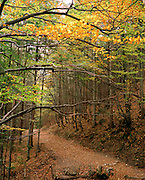 Autumnal leaves on path through Tatra National Park