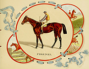 """Firenze (1884–1902), also recorded as """"Firenzi"""", was an American Thoroughbred Hall of Fame racehorse. During her six year racing career, she won 47 of 82 starts and retired as the second-highest money-earning filly in American history. She was retroactively named the American Champion Three-Year-Old Filly of 1887 and American Champion Older Female Horse for three straight years. She repeatedly defeated the top colts of the day. from the ' Album of celebrated American and English running horses ' by Kinney Bros Published in New Your in 1888 By Kinney Brothers to advance the sales of their cigarette brands. The Kinney Tobacco Company was an American cigarette manufacturing firm that created the Sweet Caporal cigarette brand and promoted it with collectible trading cards. Being a leading cigarette manufacturer of the 1870-1880s, it merged in 1890 into the American Tobacco Company."""