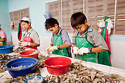 Oct. 6, 2009 -- SAMUT SAKHON, THAILAND: Burmese children work in a Thai owned shrimp processing plant sorting and grading shrimp in Samut Sakhon, Thailand, Oct. 6. The Thai fishing industry is heavily reliant on Burmese and Cambodian migrants. Burmese migrants crew many of the fishing boats that sail out of Samut Sakhon and staff many of the fish processing plants in Samut Sakhon, about 45 miles south of Bangkok. Migrants pay as much $700 (US) each to be smuggled from the Burmese border to Samut Sakhon for jobs that pay less than $5.00 (US) per day.   Photo by Jack Kurtz / ZUMA Press