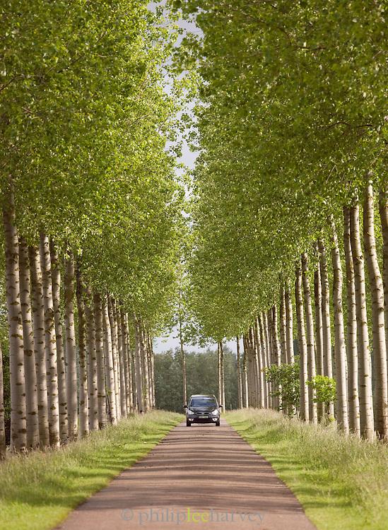 Trees alongside the Canal du Centre, Hainaut, Wallonia Region, Belgium