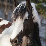 20120314 Drum Horse