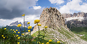 A field of yellow buttercup flowers (Ranunculus genus) blooms at Pordoi Pass in Italy, Europe. In the distance rise the Langkofel/Sassolungo Group (left) and Sella Group (right). We highly recommend hiking the Bindelweg/Viel del Pan trail for a majestic perspective on the Queen of the Dolomites, glacier-clad Marmolada (3343 meters / 10,968 feet). Take state highway 48 (Grand Strader delle Dolomiti) to Pordoi Pass and hike up the Padon chain, a ridge of volcanic origin carpeted with lush green pasture and wildflowers. Hike an easy 5 miles with 1000 feet gain round trip to Rifugio Viel del Pan; or walk one way 4 miles to the lift at Porta Vescovo down to Arabba village, where an SAD bus can return you to Pordoi Pass during lift hours; or walk 3 hours to Lago di Fedaia and bus back. Pordoi Pass (or Pordoijoch, 2239 meters/7346 feet) is the highest surfaced road traversing a pass in the Dolomites. The Dolomites are part of the Southern Limestone Alps, Europe. UNESCO honored the Dolomites as a natural World Heritage Site in 2009. The panorama was stitched from two overlapping photos, focused near and far.
