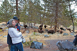 Photographers shooting Buffalo in the Lamar Valley of Yellowstone National Park