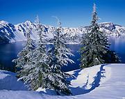 Hemlocks and Crater Lake in Winter, Crater Lake National Park, Oregon