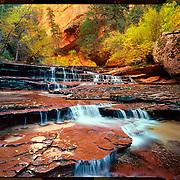 Cascade, Left Fork of the North Creek, Zion National Park. 4x5 Kodak Ektar 100. photo by Nathan Lambrecht