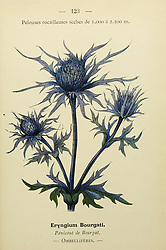Nouvelle flore coloriée de poche des Alpes et des Pyrénées.<br /> Paris,Klincksieck,1906-1912.<br /> https://biodiversitylibrary.org/page/10504188