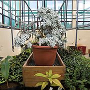 Endemic plant nursery run by Mauritius National Parks and Conservation. This room contains specimens of the most critically endangered plant species in Mauritius.