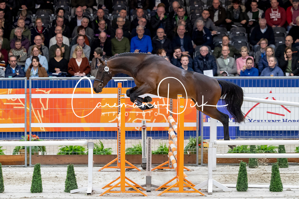 078, Melborne VDL<br /> KWPN hengstenkeuring - 's Hertogenbosch 2020<br /> © Hippo Foto - Dirk Caremans<br />  29/01/2020