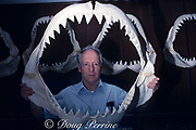 shark expert and shark jaw collector Dr. Gordon Hubbell with jaws of great white shark, Carcharodon carcharias