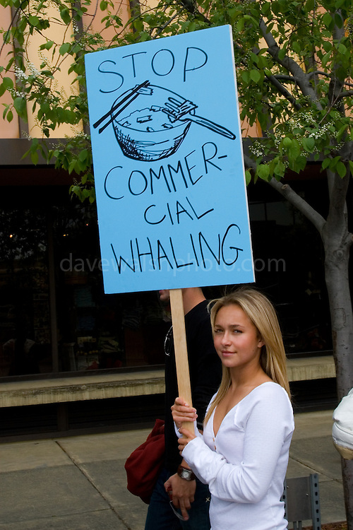 "Hollywood star of ""Heroes"" Hayden Panettiere, of Save the Whales Again Campaign, joins a Greenpeace parade in Anchorage Alaska, as part of a global day of activities with thousands of people, across twenty countries and more than fifty cities to send a message to delegates of the International Whaling Commission, meeting this week in Alaska to decide the future of the great whales. ..Hundreds of thousands of whales die every year because of human impacts such as pollution, ships strikes, climate change and being caught in nets, yet the Commission will focus discussion on where, when and how to hunt them. ..copyright: Walsh/Greenpeace"