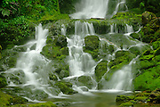 Dickson Creek at Dickson Falls  in Acadian Forest<br /> Fundy Natinoal Park <br /> New Brunswick<br /> Canada