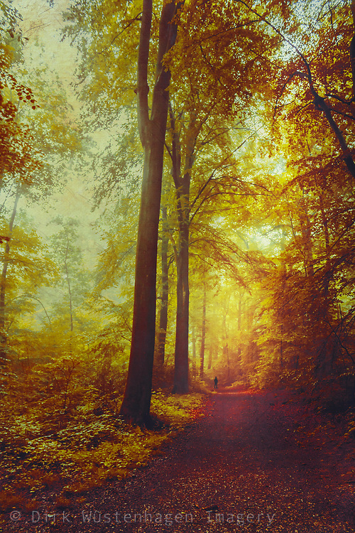 Walk through a colourful fantasy forest - manipulated photograph