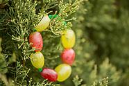 Feeding wildlife and repurposing a Christmas Tree