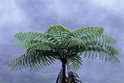 Giant Bromeliad<br />Cloud Forest, Mindo, ECUADOR. South America
