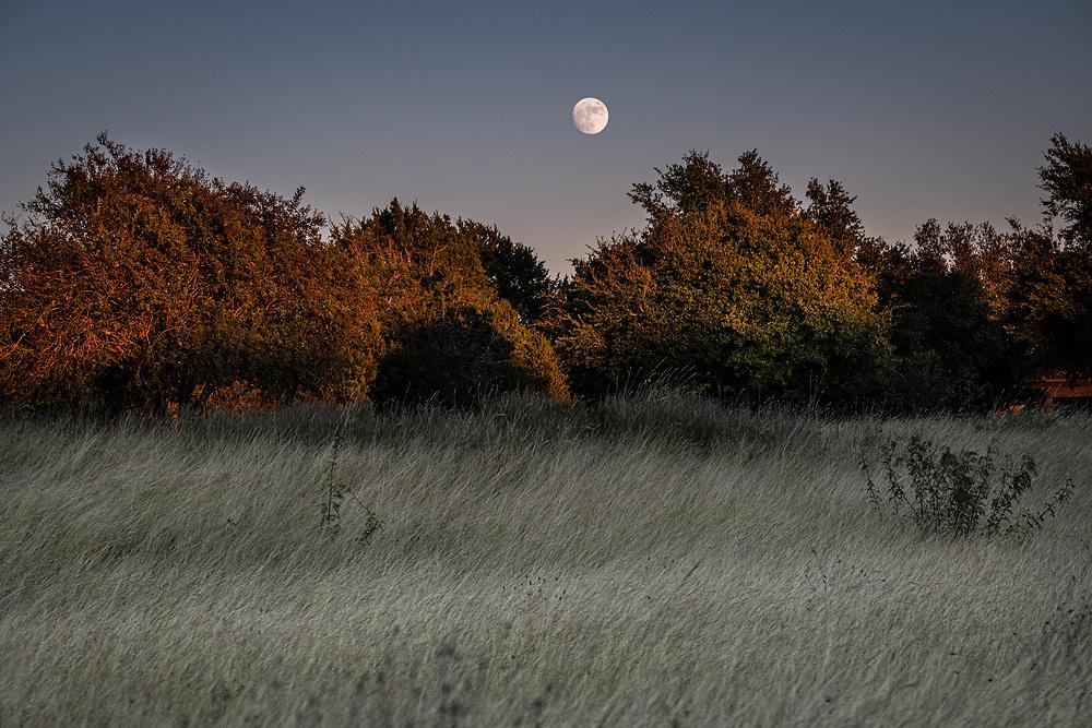 Autumn moonrise, Brodie field, South Austin, Texas