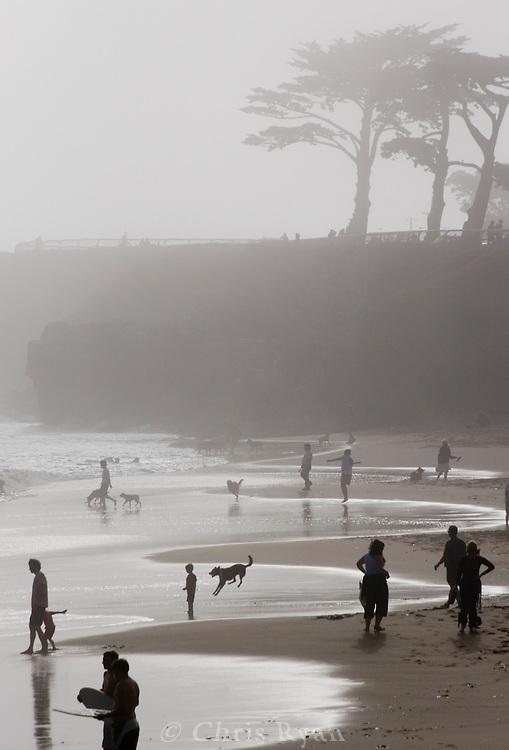 Dogs and people playing on Its Beach, Santa Cruz, California