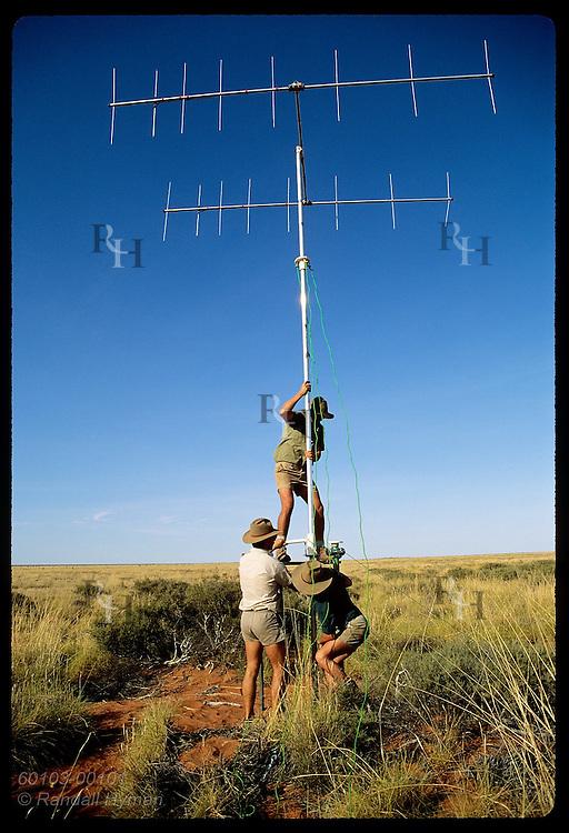 Men hoist antenna to track radio-collared rufous hare-wallabies, or malas, in the Tanami Desert. Australia
