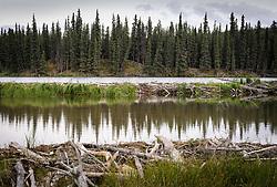 Beavers at Horseshoe Lake at Denali National Park and Preserve in Alaska have built several layers of dams on the lake. The dams can be seen at the end of the Horseshoe Lake Trail.