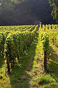 Vineyard. Chateau de Tracy, Pouilly sur Loire, France