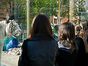 """Besucher im Moskauer Zoo. Der Moskauer Zoo wurde 1864 eröffnet und ist damit der älteste Zoo Russlands. Hier werden rund 1000 Tierarten mit über 6.500 Exemplaren, vom Rotwolf über den Zobel bis zu den Elefanten, gehalten. Im """"Exotarium"""", einer Art Aquarium, kann man Unterwasserwelten samt Fauna tropischer Meere bewundern. Der Zoo wurde von 1990 bis 1997 grundlegend modernisiert und auf seine heutige Fläche von rund 21,5 Hektar erweitert. <br /> <br /> Visitors at Moscow Zoo. The Moscow Zoo is the largest and oldest zoo in Russia - It was founded in 1864."""