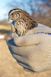 Bird For Live Bait