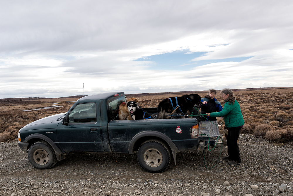 A couple of local ladies load sled dogs into the back of a truck after giving the dogs some practice time in off-season pulling. It'll be a long summer for the dogs as they await the first snows of autumn, Naknek, Alaska.