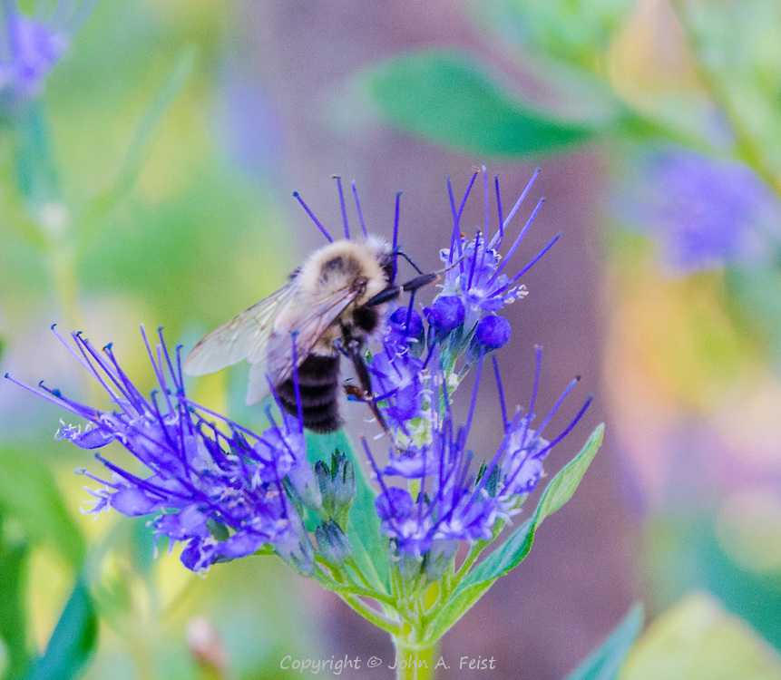 This little guy was much too busy sipping nectar to pay attention to me.  I was amazed that he didn't crush the delicate structures in the flower.
