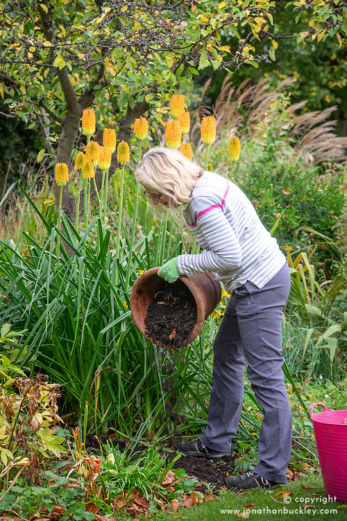 Emptying out summer containers that have finished flowering and using old compost to mulch bare ground in borders