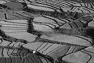 Rice Paddies in Paro, Bhutan, 2014