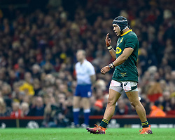 Cheslin Kolbe of South Africa<br /> <br /> Photographer Simon King/Replay Images<br /> <br /> Under Armour Series - Wales v South Africa - Saturday 24th November 2018 - Principality Stadium - Cardiff<br /> <br /> World Copyright © Replay Images . All rights reserved. info@replayimages.co.uk - http://replayimages.co.uk