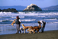 Dog Walker and jumping dog doing tricks with group of dogs walking at Ocean Beach, San Francisco, California