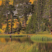Weir Lake Fly Fisherman -  Fall Color