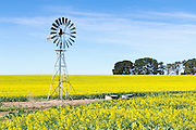 Windmill in a field of canola crop, next to a dirt track in Inverleigh, rural country Victoria, Australia. <br />