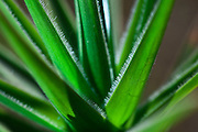 Nova Lima_MG, Brasil.<br /> <br /> Estacao Ecologica de Fechos em Nova Lima, Minas Gerais. Na foto detalhe de uma planta.<br /> <br /> Fechos Ecological Station in Nova Lima, Minas Gerais. In this photo a plant.<br /> <br /> Foto: JOAO MARCOS ROSA / NITRO