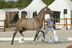 Ermelo KWPN Paardendagen 2009<br /> Photo © Karin van der Meul