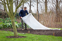 Covering a seedbed in a vegeatble garden with horticultural fleece to warm up the earth before sowing in early spring.