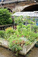 london allotment