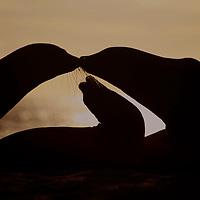 South America, Ecuador, Galapagos Islands. Galapagos Sea Lion family silhouetted against setting sun.