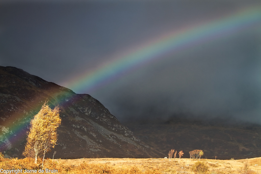 A Rainbow over a Golden Birch tree in autumn in the Scottish Highlands