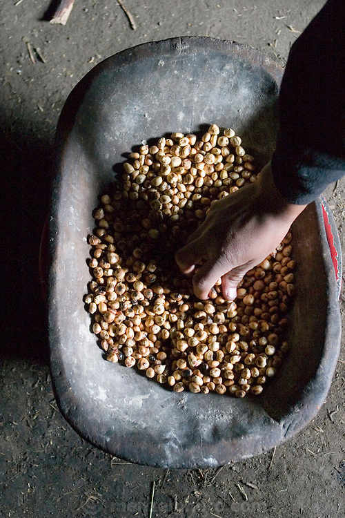 A wooden bowl with parched corn on the dirt floor of the Ayme's cooking house in the village of Tingo, Ecuador. (Supporting image from the project Hungry Planet: What the World Eats.) (MODEL RELEASED IMAGE).