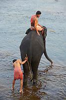 Inde, Etat du Kerala, centre d entrainement des elephants de Kodanad // India, Kerala state, elephant training centre at Kodanad